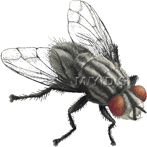 fruit fly clipart - photo #41