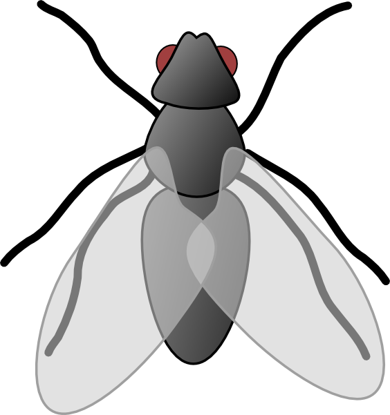 Fly Clip Art V