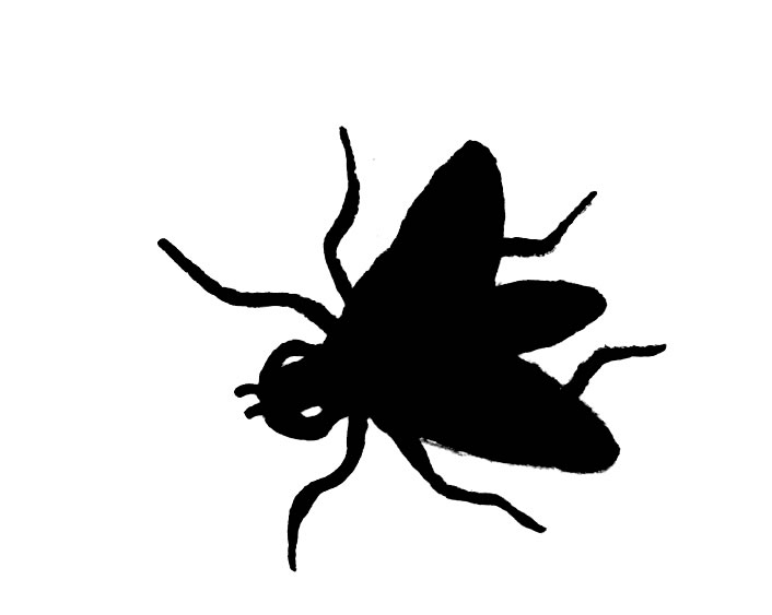Fly Clipart Marchfly Jpg