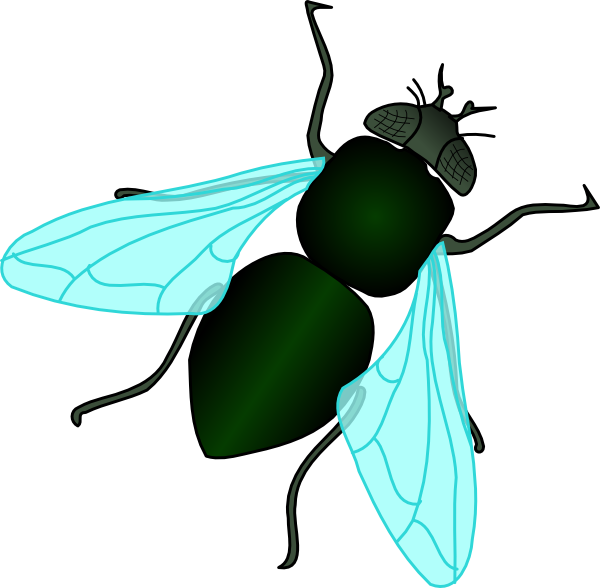 House Fly Clipart Download This Image As