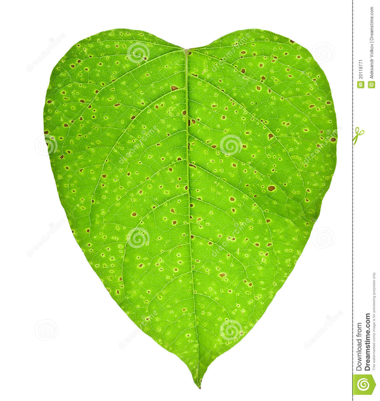 Heart With Blood Clots Of Vessels Concept  Sick Green Leaf Of A Plant
