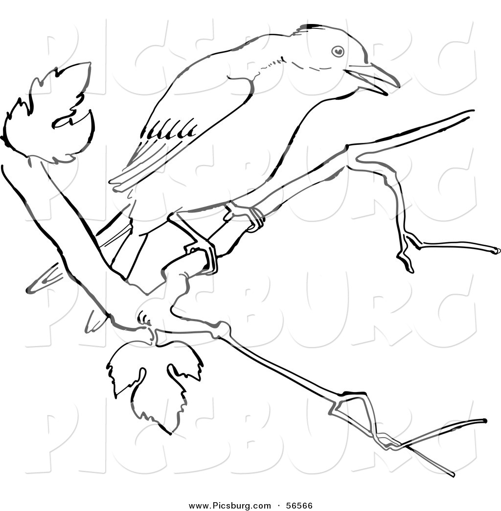 Dead Mockingbird Mockingbird Drawing Mockingbird Outline Mockingbird