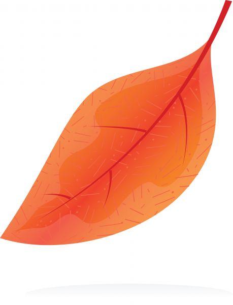Gallery for orange leaf clip art for Amber leaf