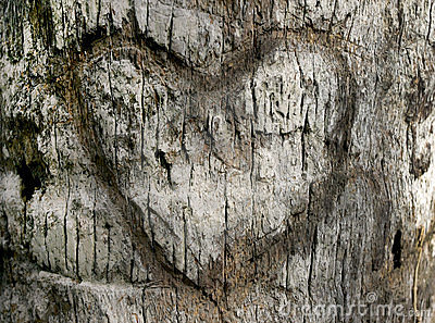 Carved Heart In Tree Bark Stock Photos   Image  18992993