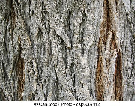 Clip Art Of Texture Of Tree Bark Csp6687112   Search Clipart