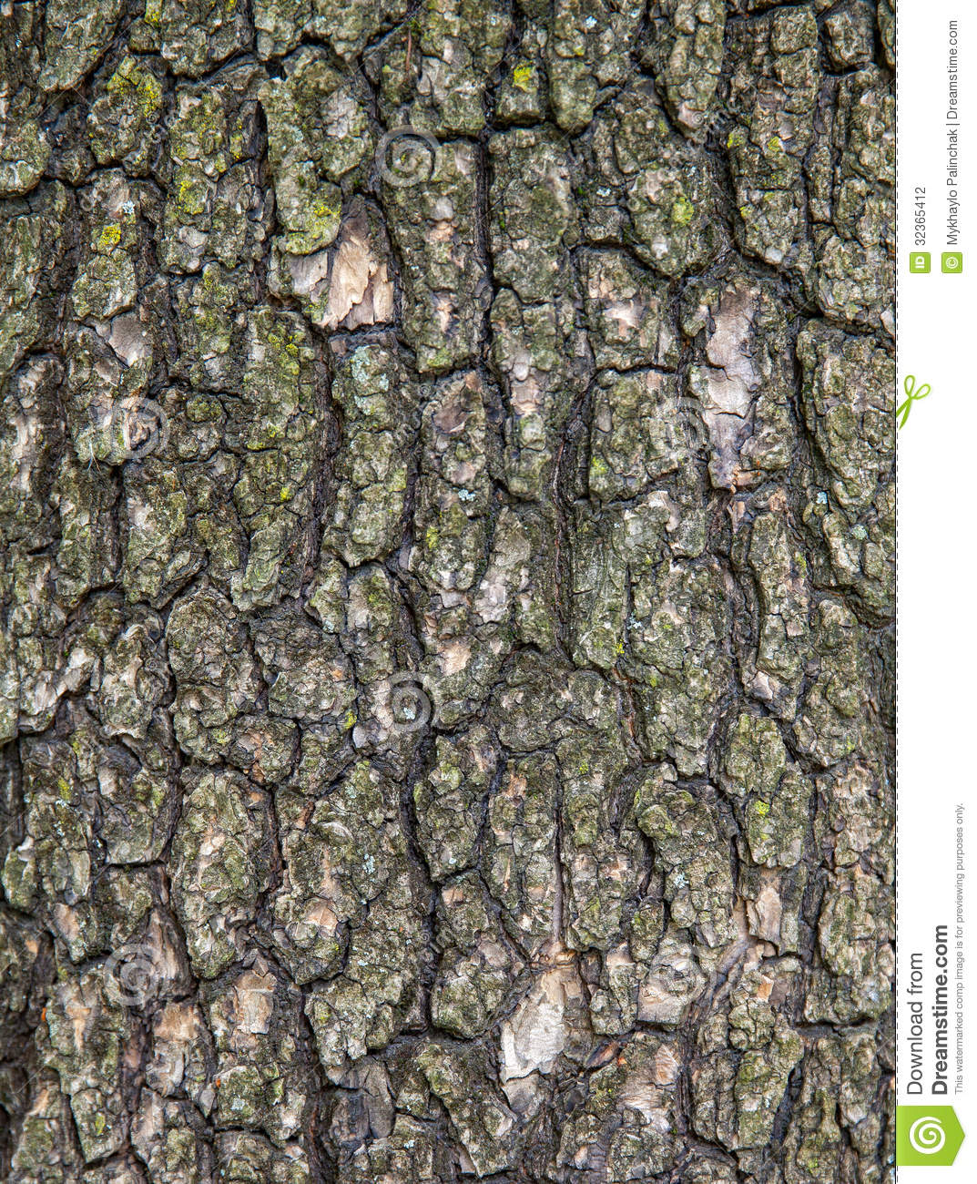 Old Tree Bark Stock Photography   Image  32365412