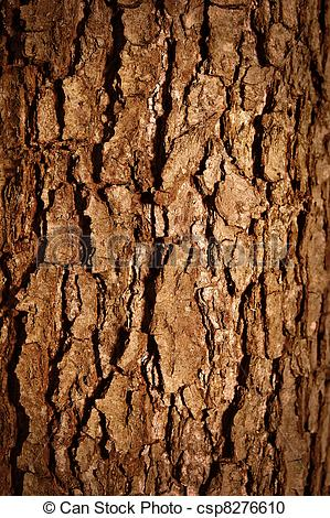 Stock Photography Of Tree Bark   Close Up Of A Wood Brown Bark Texture