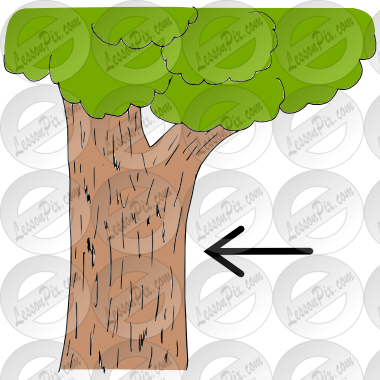 Tree Bark Clipart Bark Picture