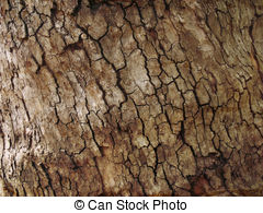 Tree Bark Illustrations And Clipart