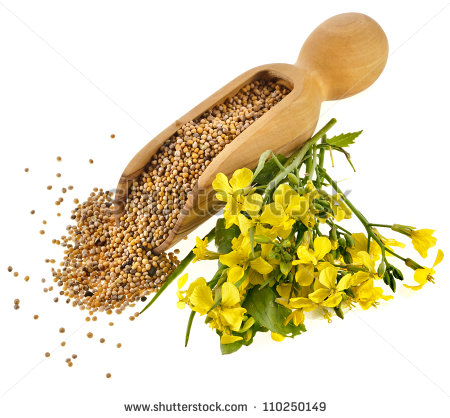 Mustard Seed Tree Seeds In The Wooden Clipart