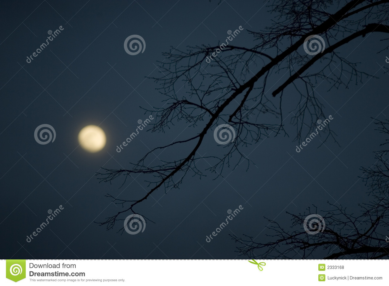 Full Moon Royalty Free Stock Photos   Image  2333168