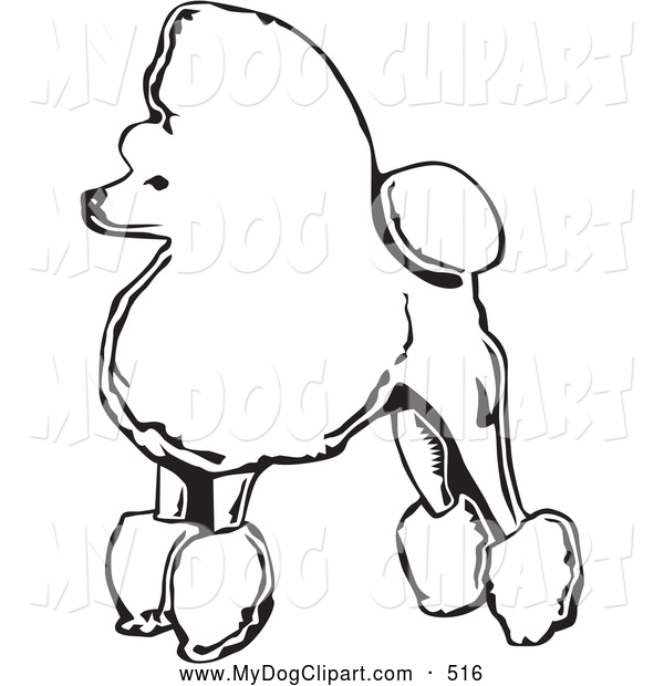Back   Gallery For   Toy French Poodles Clip Art