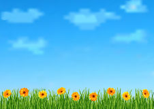 Background With Sky Clouds Grass Gerbera Flowers Stock Image