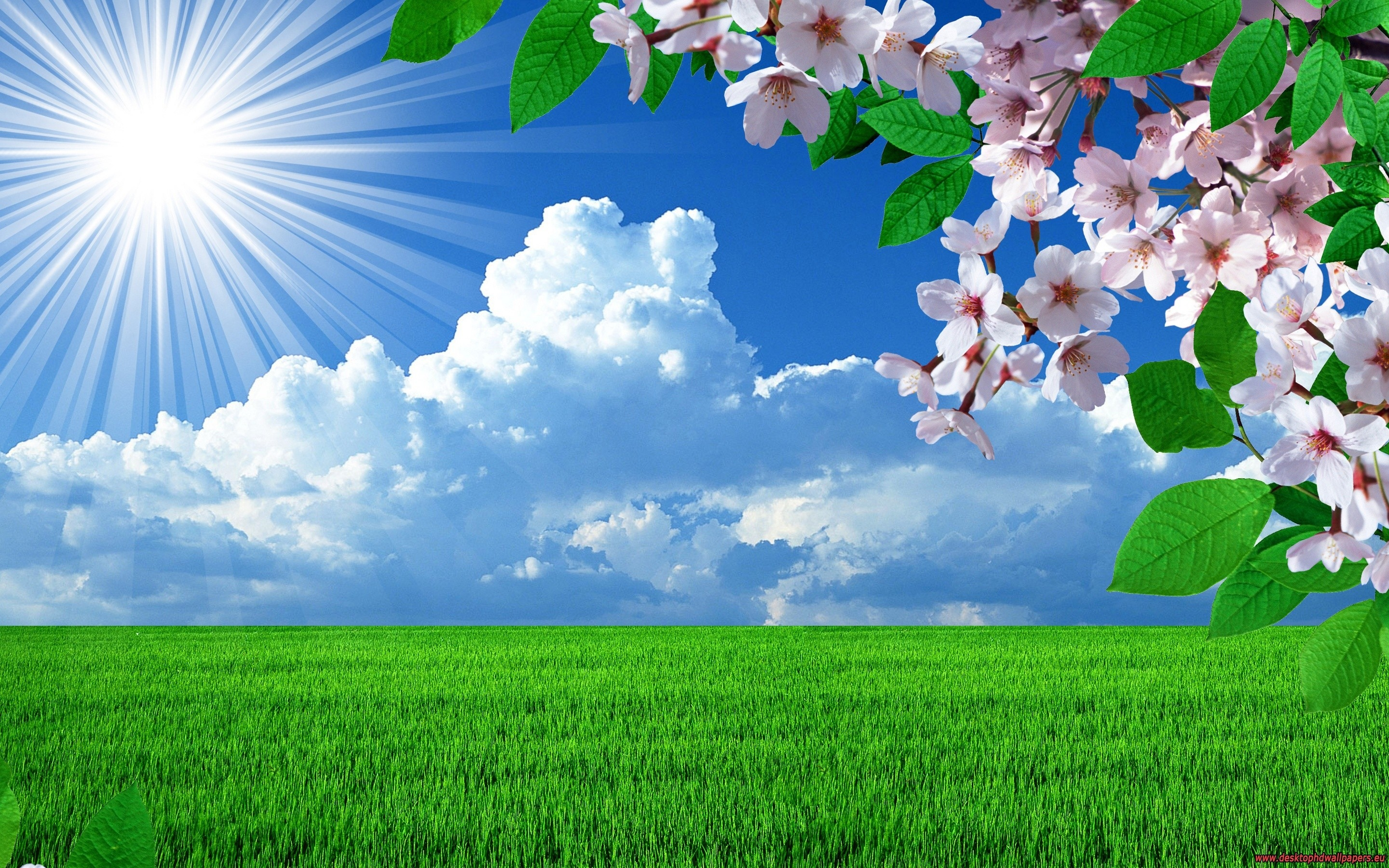 Spring Flowers Landscapes Trees Sky Landscape Wallpaper Background