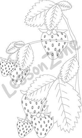Strawberry Plant B W