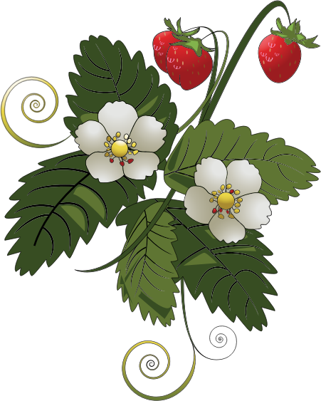 Strawberry Plant Outline Clipart - Clipart Kid