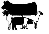 2014 4 H Livestock Judging And Skillathon Interest Meeting   Clover