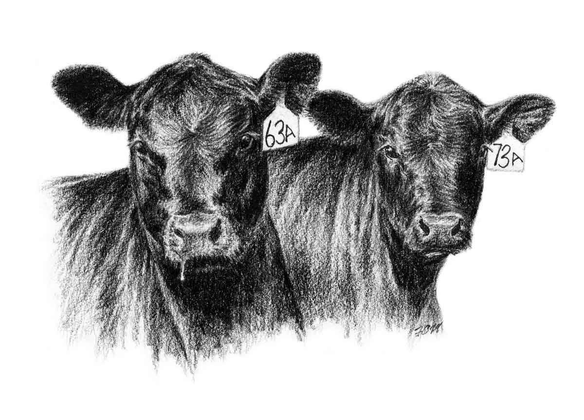 American Angus Association   Angus Screen Savers And Clip Art