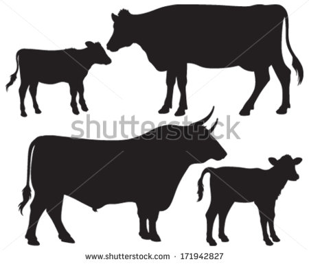 Quality Black And White Vector Silhouettes Of A Bull A Cow And Two