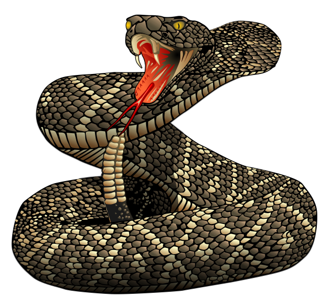 Clipartlord Com Exclusive Rattlesnakes Are A Group Of Venomous Snakes