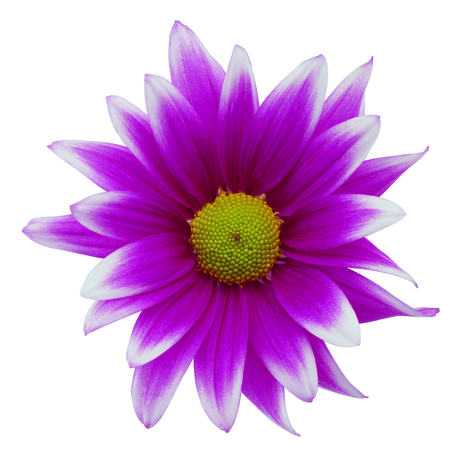 Flower Graphics Clipart Clipart Suggest