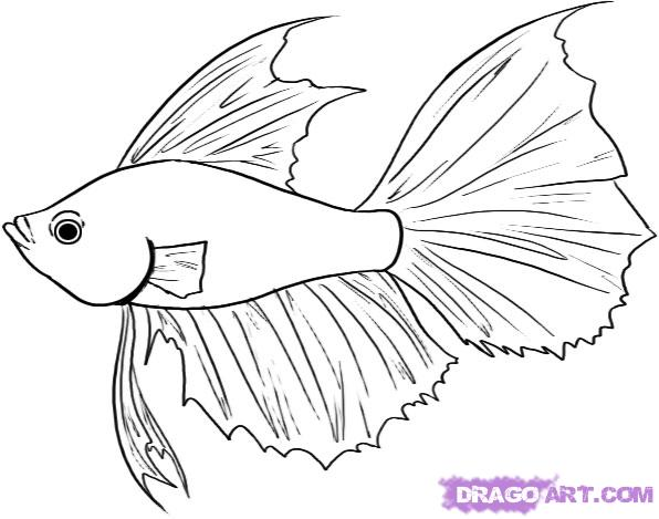How To Draw A Betta Step By Step Fish Animals Free Online Drawing