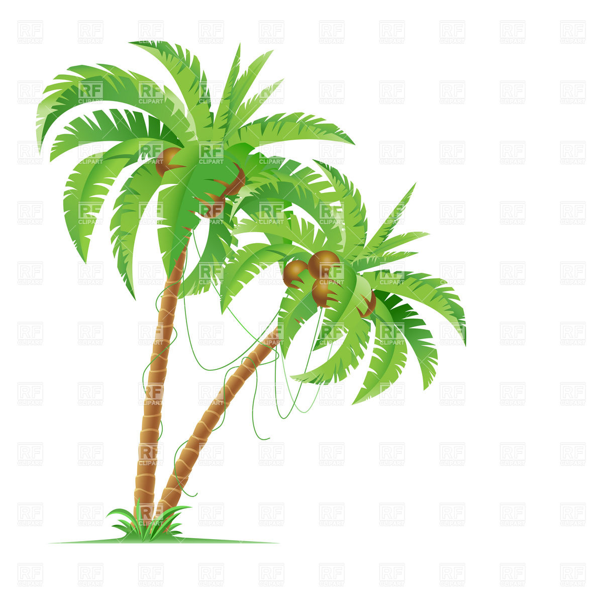 Two Palm Trees With Coconuts Download Royalty Free Vector Clipart