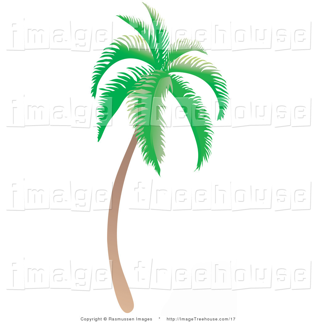 Vector Clipart Of A Curved Tropical Palm Tree   Royalty Free