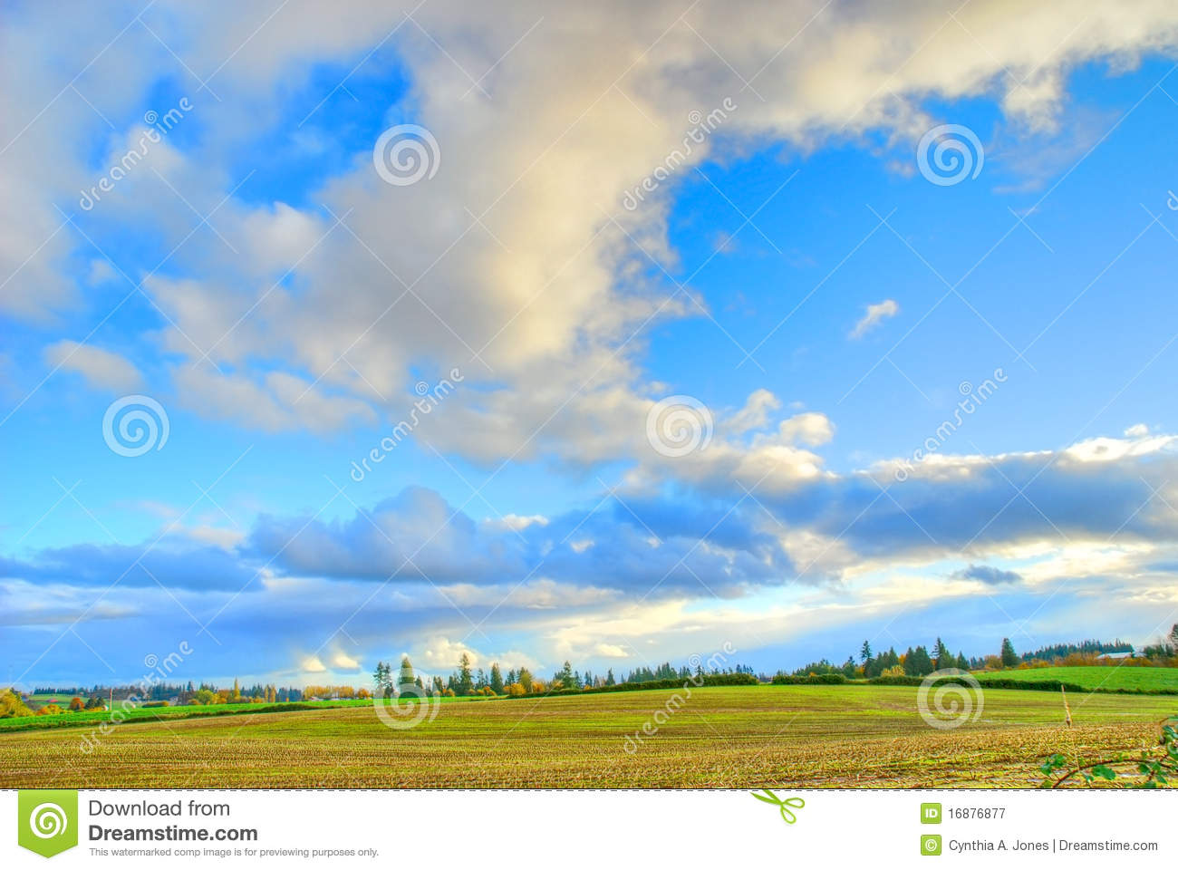 Corn Field Clouds Royalty Free Stock Photography   Image  16876877