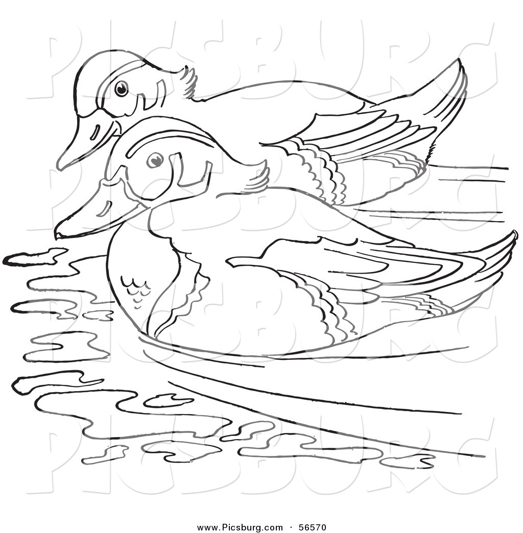 Line Art Duck : Duck pond black and white clipart suggest