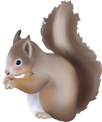 Squirrel Clip Art Squirrel Clipart 3 Jpg