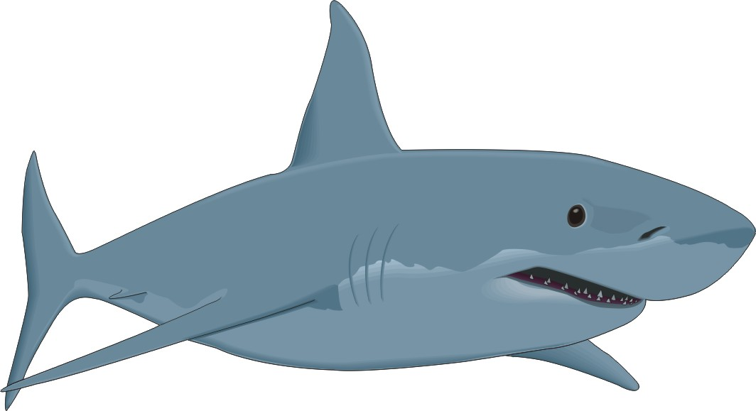 Cartoon Fish  Great White Shark