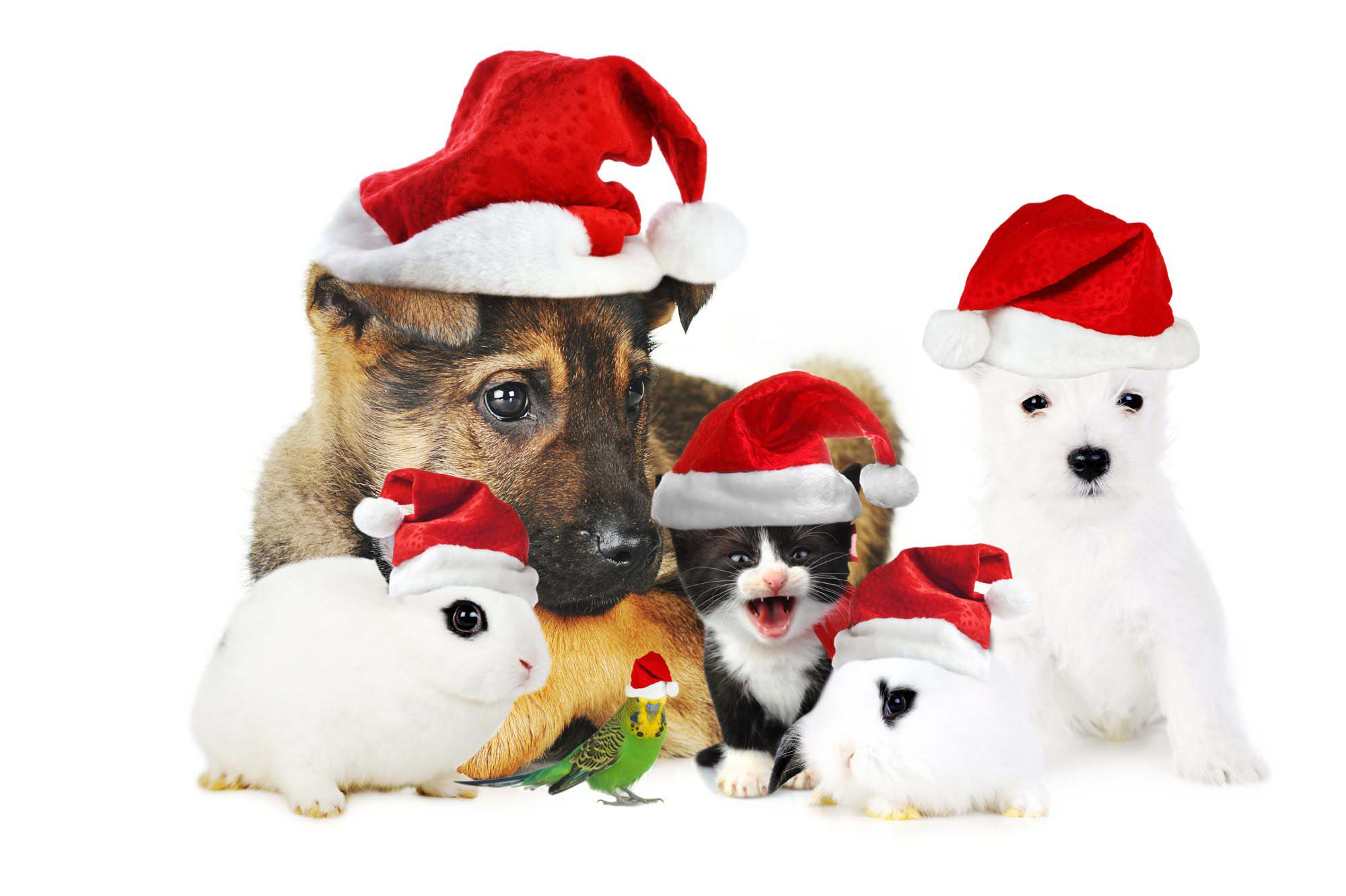 Cute Christmas Dog Wallpapers And Pictures