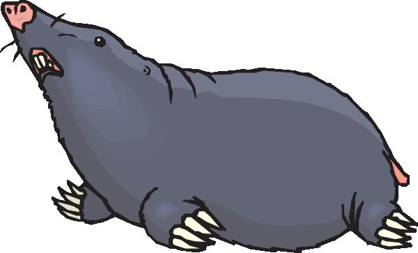 Mole Animal Cartoon Chemistry