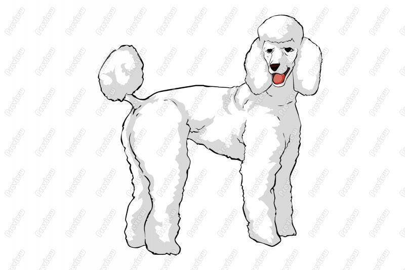 Standard Poodle Dog Character Clip Art   Royalty Free Clipart