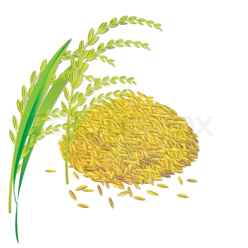 Brown Rice Plant Clipart - Clipart Suggest