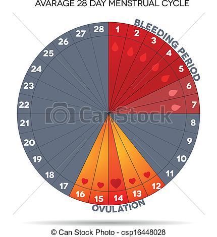 Menstrual Period Clipart Menstrual Cycle   Csp16448028