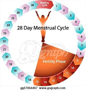 Menstrual Period Clipart Menstrual Cycle Fertility