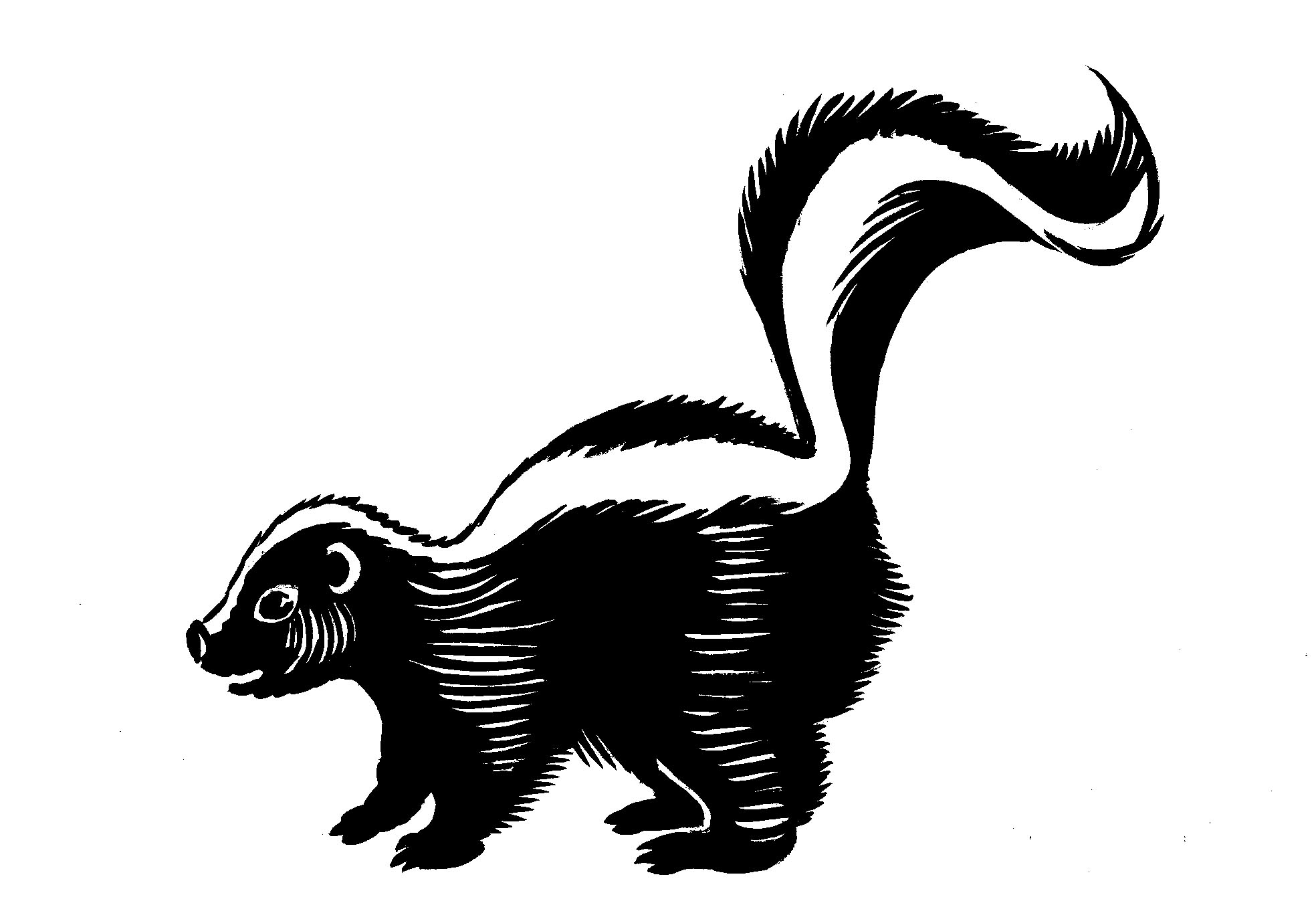 Clip Art Skunk Clip Art cartoon skunk clipart kid 20 images for displaying skunk