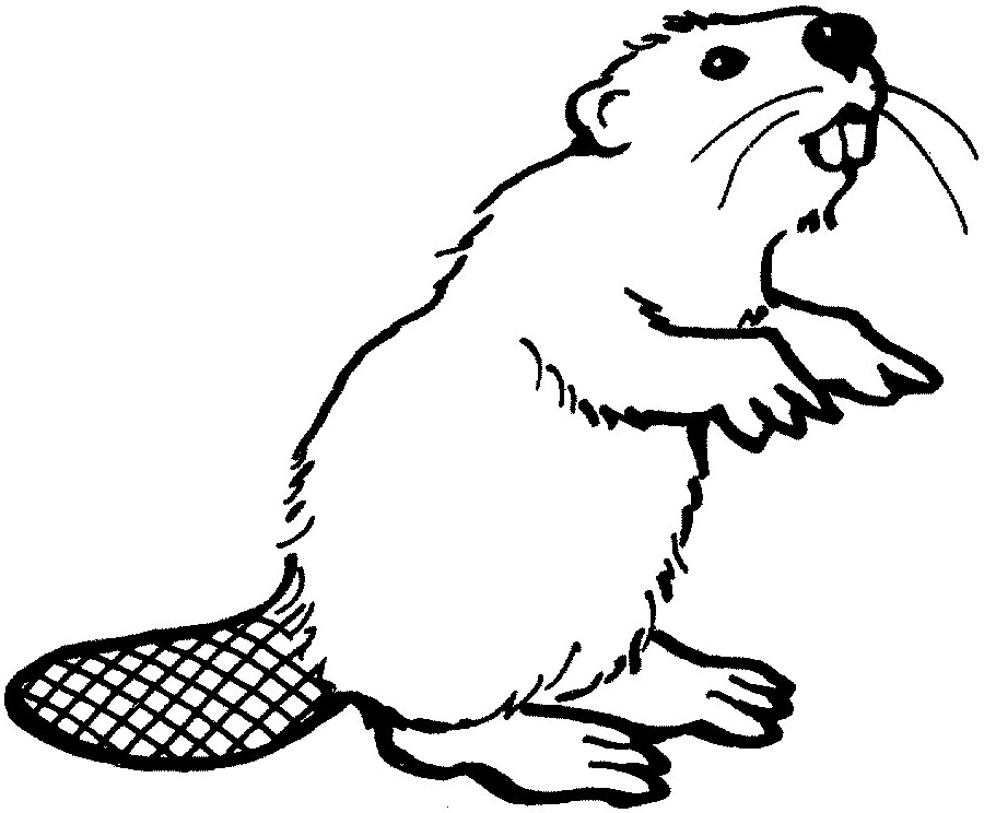 Beaver Clip Art   Cliparts Co