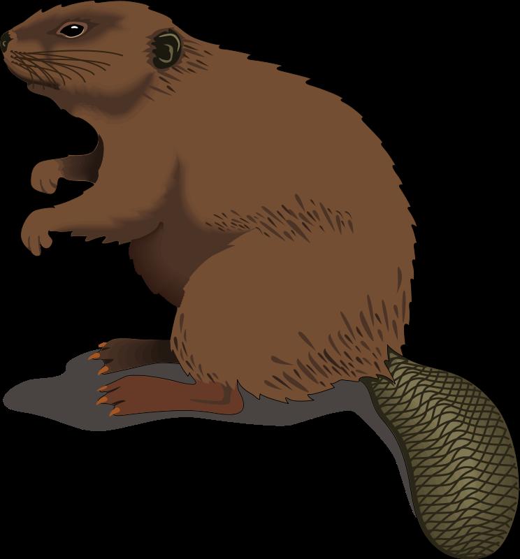 ... -beaver-clip-art-clipart-panda-free-clipart-images-jwpm8L-clipart.png