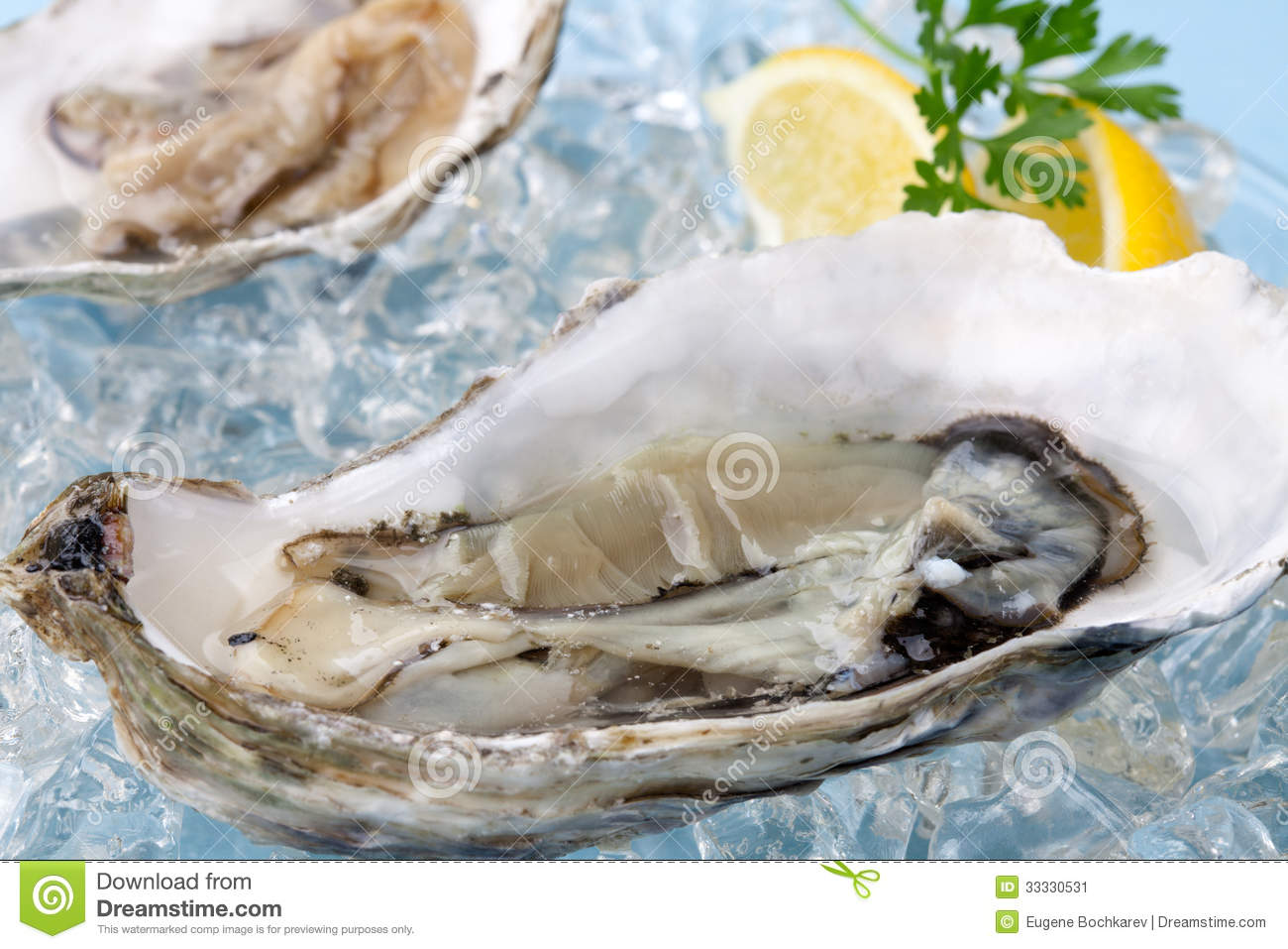 Oysters On Ice Garnished With Lemon And Parsley Over Light Blue