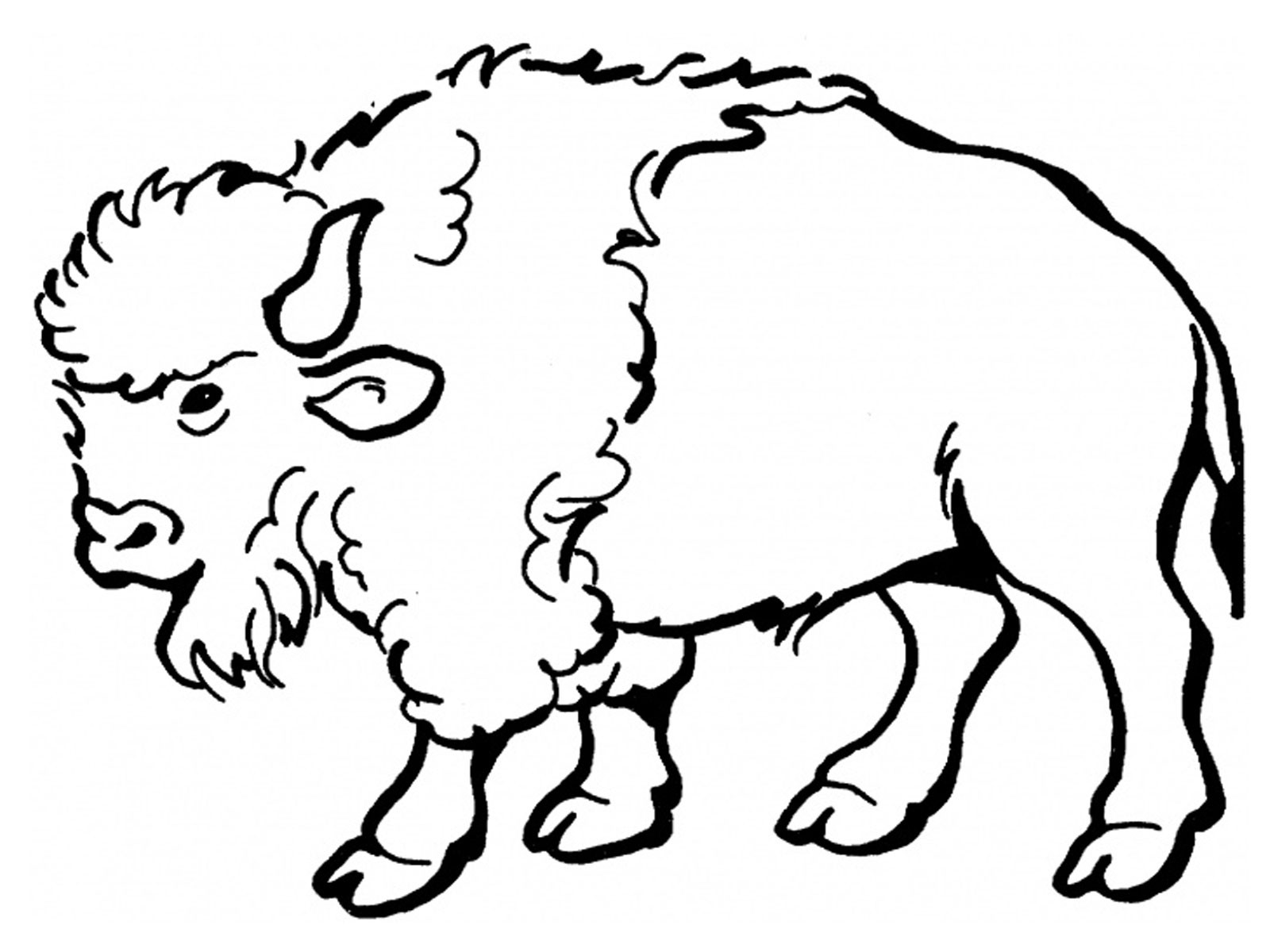 Baby Bison Clipart