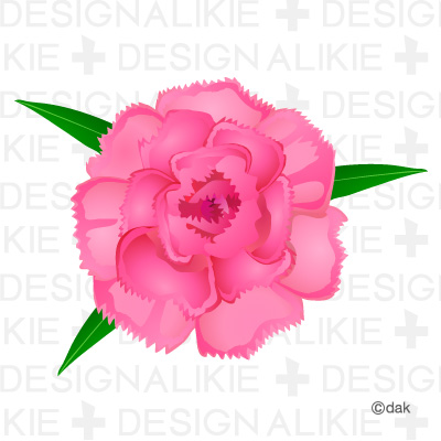 Carnation Flower Pictures Of Clipart And Graphic Design And