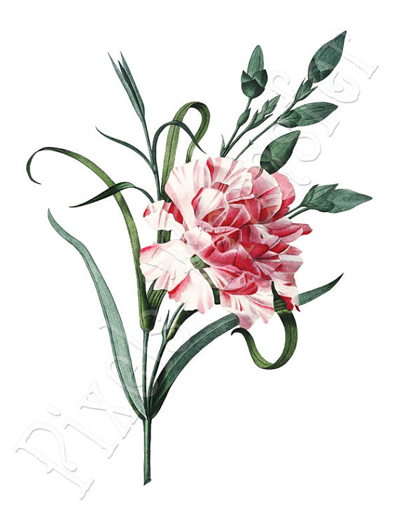 Carnation Instant Download Wedding Clipart Large Digital Image