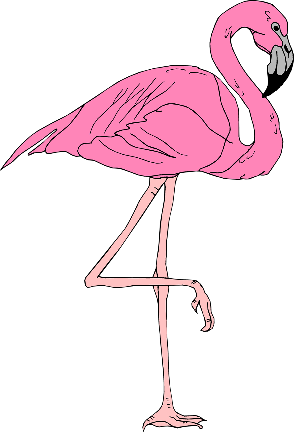 Flamingo   Free Stock Photo   Illustration Of A Pink Flamingo     3399