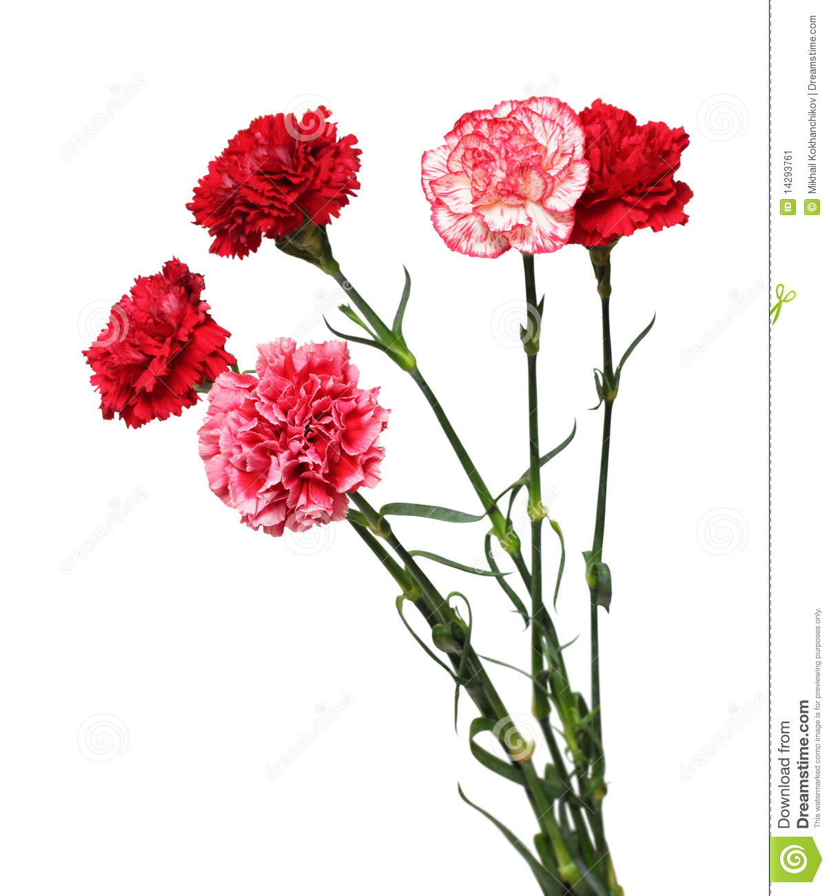 More Similar Stock Images Of   Bouquet Of Carnation Flowers