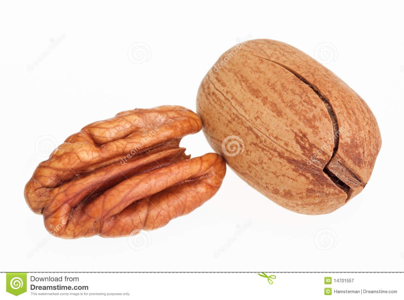 Pecan Clipart Few Pecan Nuts One Cracked
