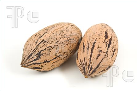 Pecans Clipart Photo Of Two Pecan Nuts On