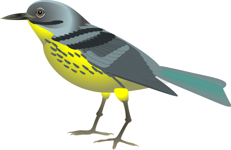 Have A Look At The Bird Clipart Pictures In Animal Clipart